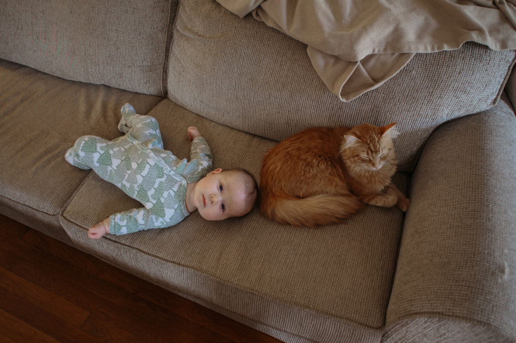 baby and orange cat on couch