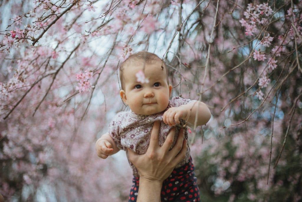 roscoe in cherry blossom tree