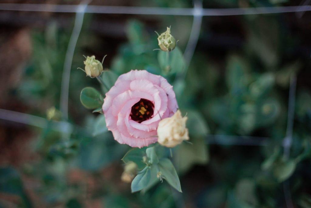 bellaire blooms flower farm wedding florist