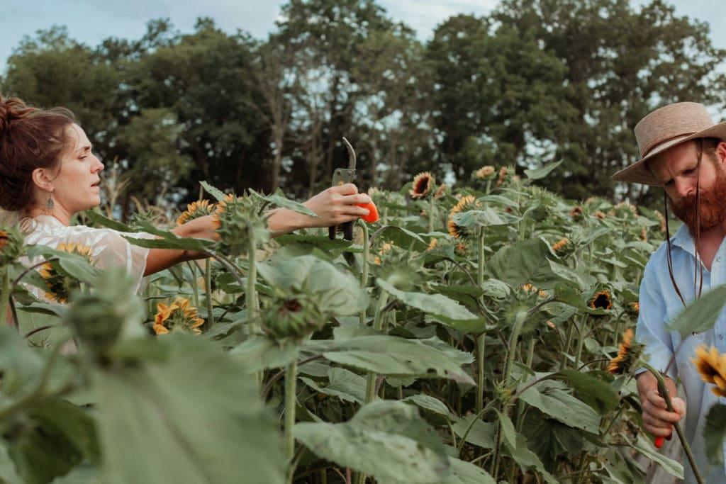 bellaire blooms flower farm sunflowers