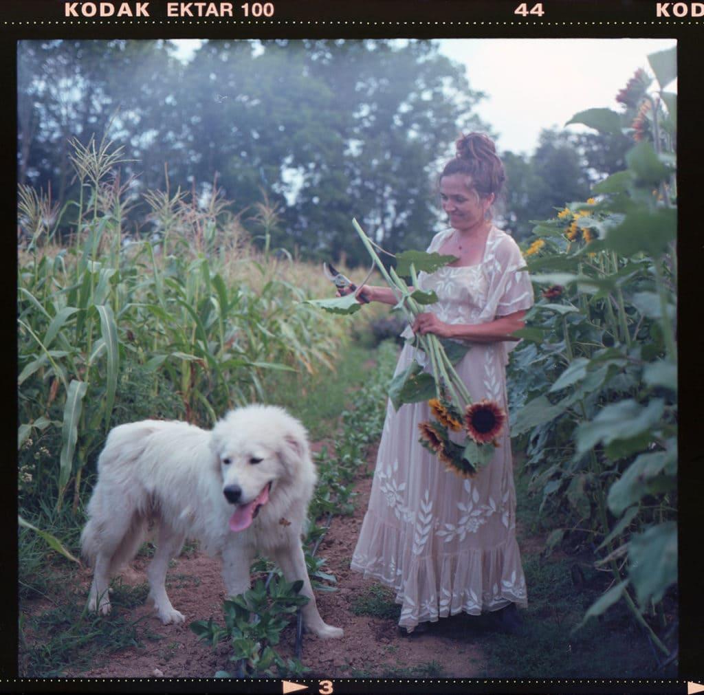 sunflower farming in kentucky
