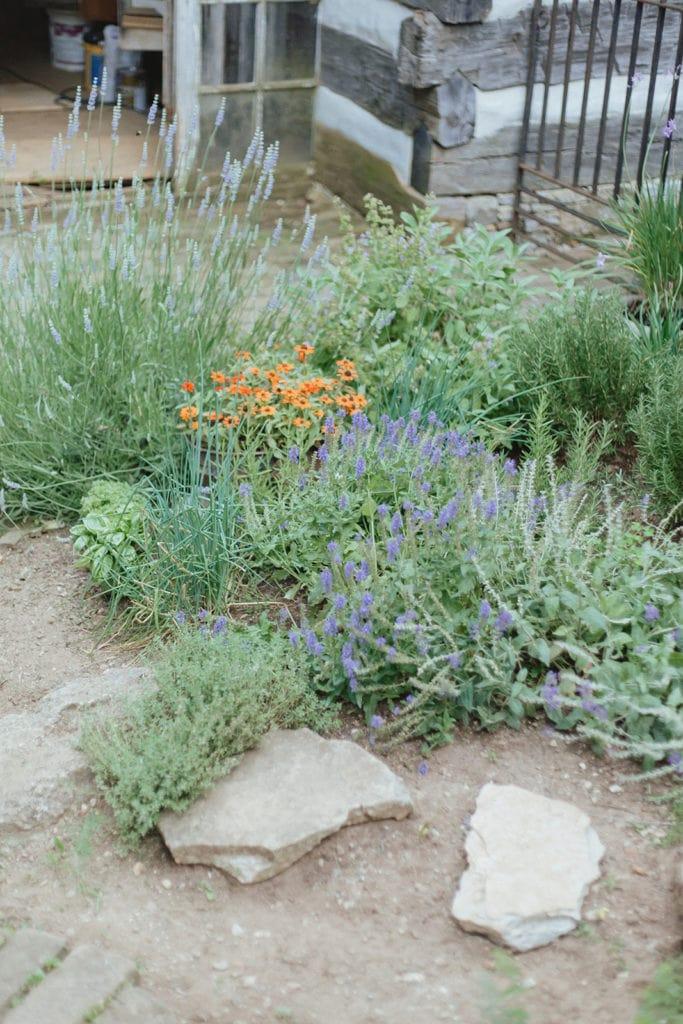 wildflower garden midway ky